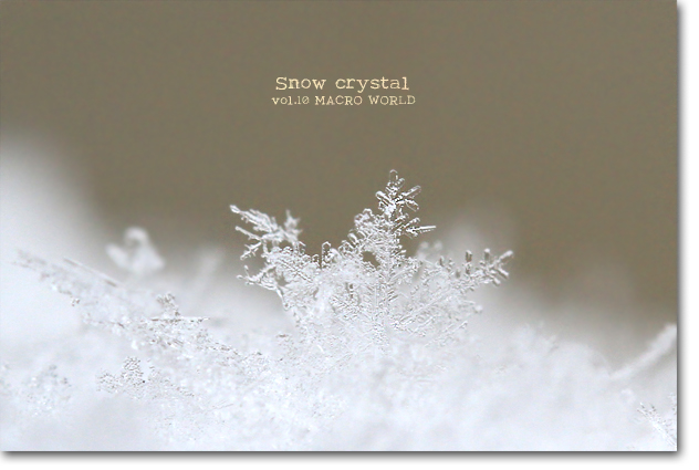 Snow-crystal-4.jpg