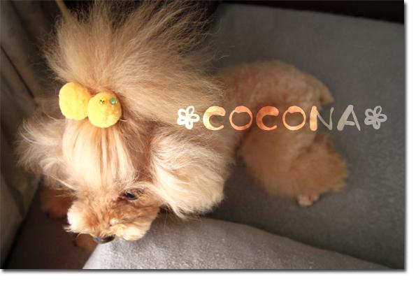 cocona_20110718111504.jpg
