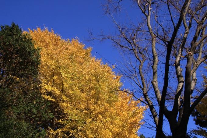 20091209IMG_0603.jpg