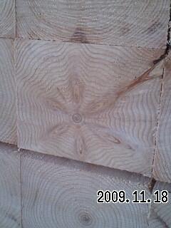 植林木の特徴・節