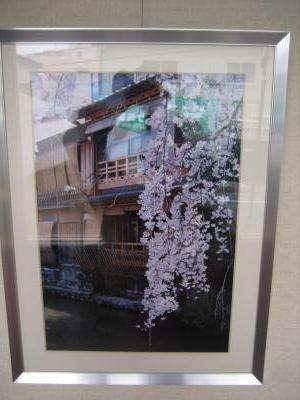 祇園の桜 今西様作品