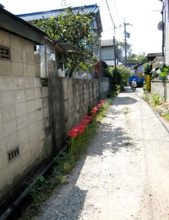 高牟神社周辺 路地の彼岸花