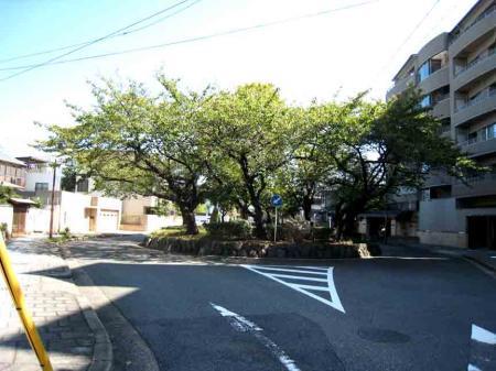徳川町 道の真ん中の木々