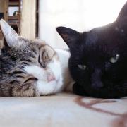 向野よる♂ 猫年齢17歳 & 向野じじ♂ 猫年齢18歳