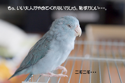 DSC_2592-3.jpg