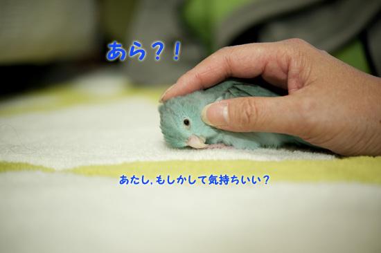 DSC_9467-2.jpg