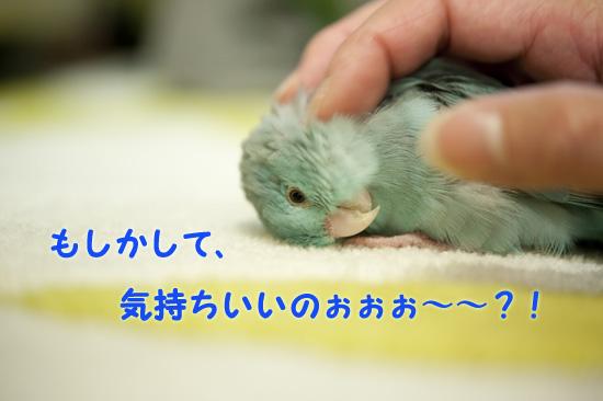 DSC_9469-3.jpg