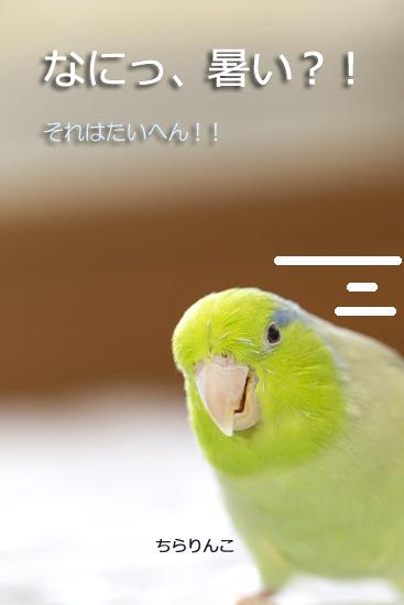 _S1W7910-4.jpg
