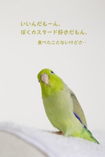 _S1W8000.jpg