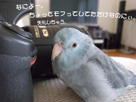 re-_0012496-2.jpg