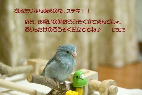 reDSC_7285-3.jpg
