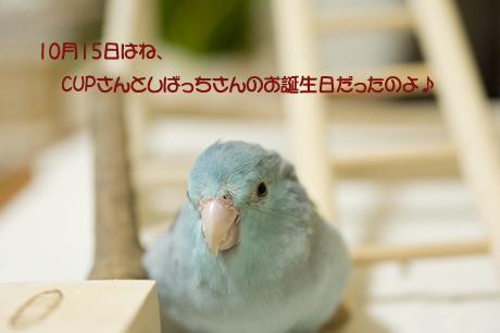 reDSC_7349.jpg
