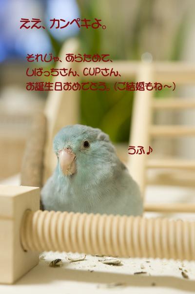 reDSC_7351.jpg