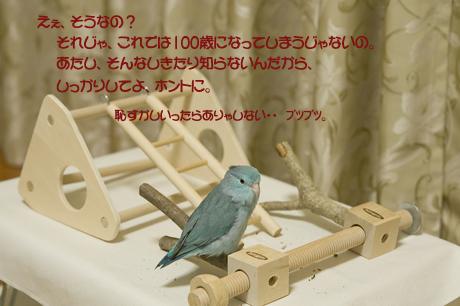 reDSC_7371.jpg