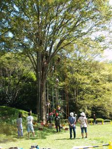 武蔵丘陵ツリー