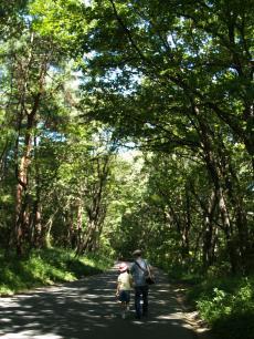武蔵丘陵森の道