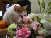 お花&いっちゃん 4