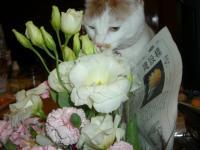 お花&いっちゃん 2