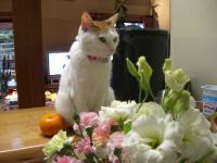 お花&いっちゃん