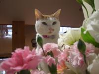 お花&いっちゃん 9