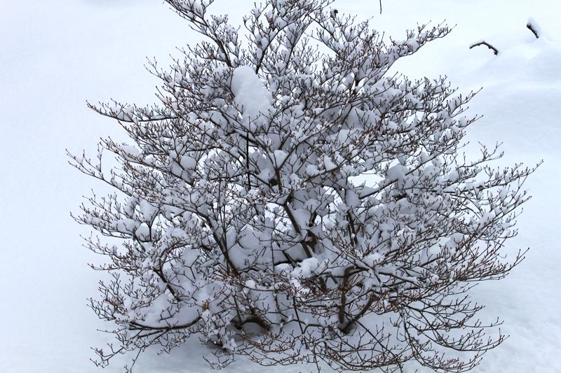 大雪 036