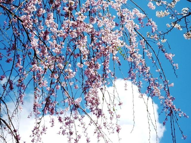 春、光城山 074