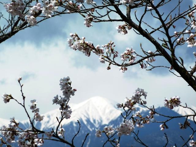 春、光城山 095