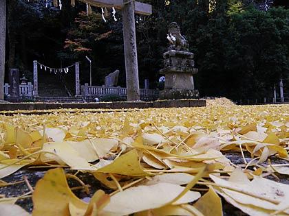 '10岩部神社イチョウ4