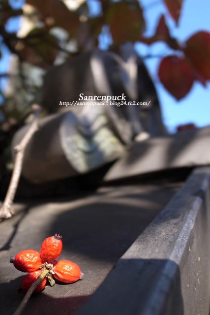 屋根の上の赤い実