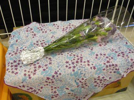 #3 マミーの棺