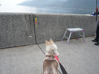 私も釣りたい