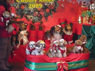 クリスマスバージョン犬2