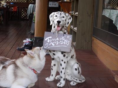 サラと犬の置物