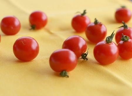 トマトの会談Ⅱ000