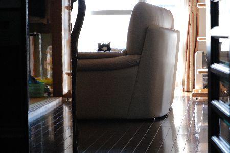 20100113sasuke2.jpg