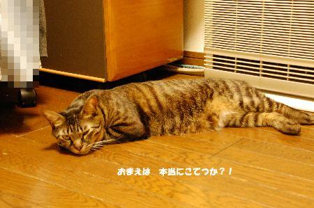 20100115kotetsu2.jpg