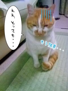 090925-2nyanta.jpg