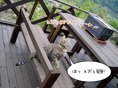 091002-1maruko.jpg