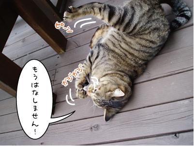 091002-4maruko.jpg