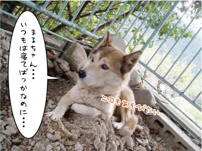 091002-6maruko.jpg