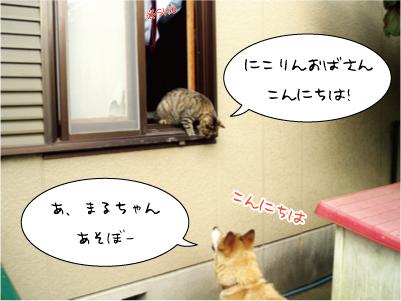 0914-1maruniko.jpg