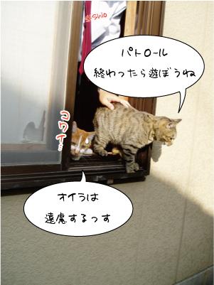 0914-2maruniko.jpg