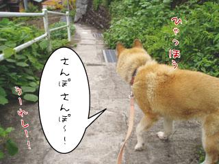 niko_0821-2.jpg
