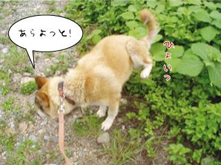 niko_0821-4.jpg
