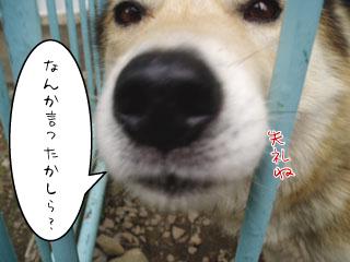 niko_0821-5.jpg