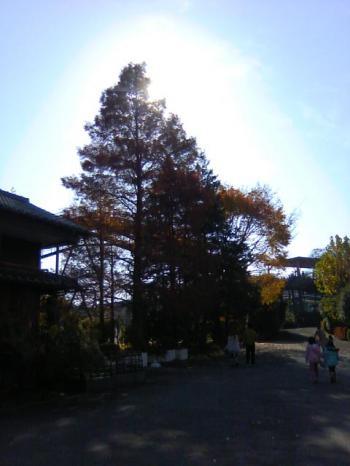 20101128_04.jpg