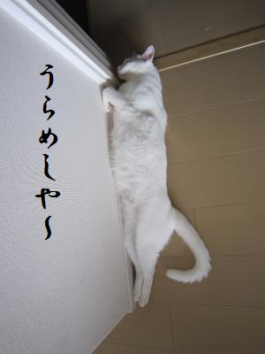 IMG_0775_convert_20100729103814.jpg