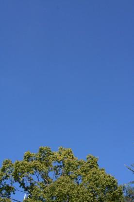 くっきり青い空