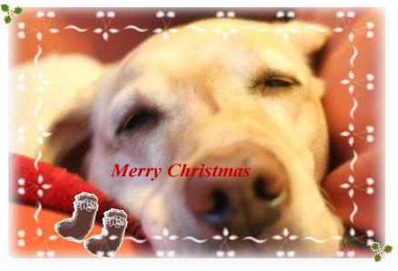 セナのメリークリスマス☆