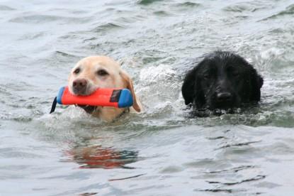 セナねえに着いて泳いだ